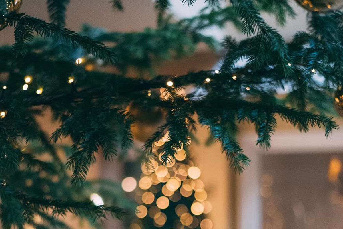 Effective Tips and Tricks to Preserve Christmas Tree