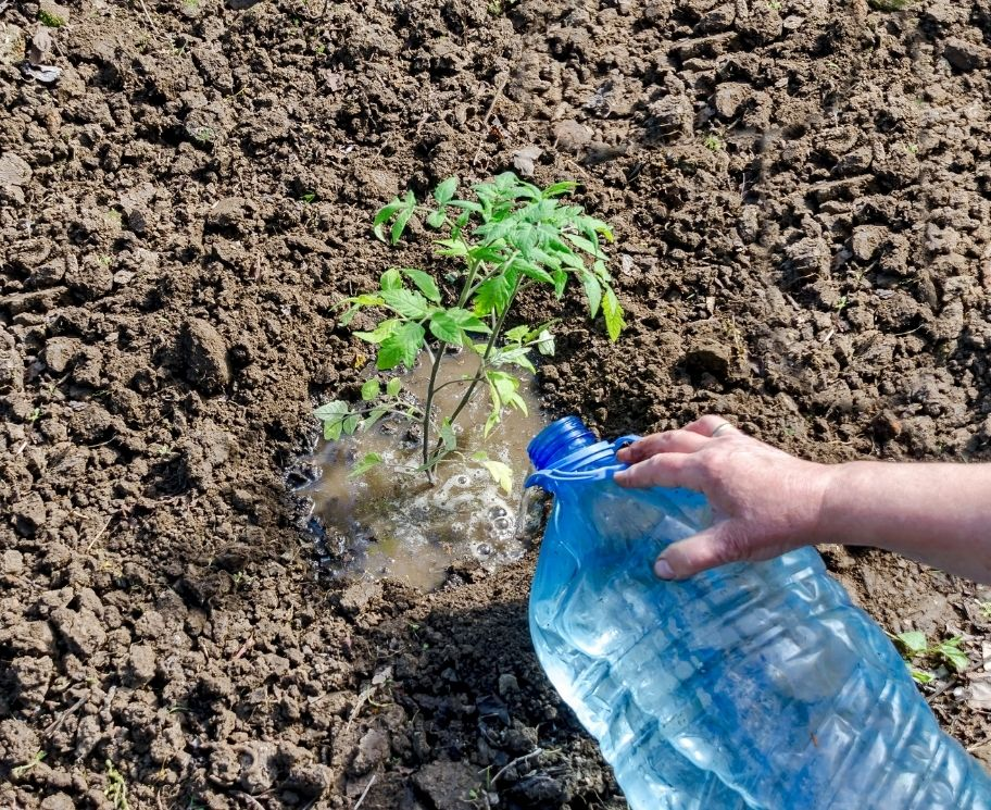 Is Softened Water Safe for Plants?